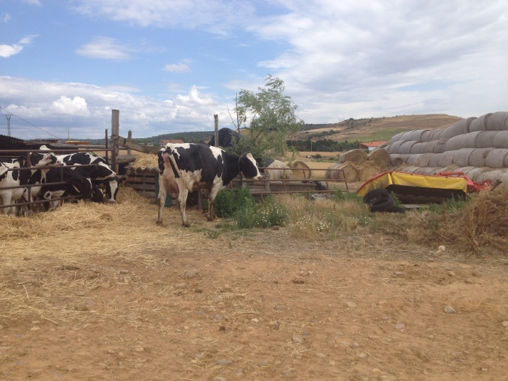 Walking through a farm on the road to Astorga
